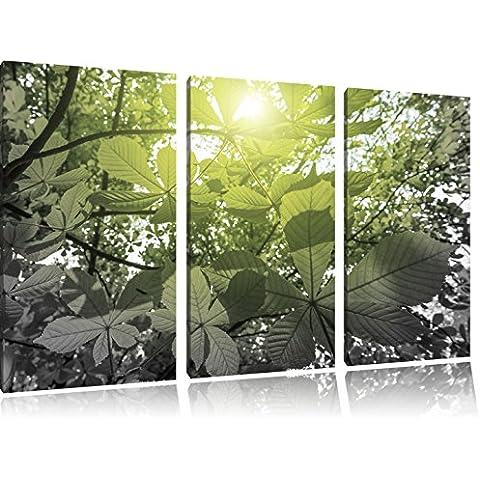 immagine 120x80 verdi foglie di castagno bianco / nero 3 pezzi picture tela su tela, XXL enormi immagini completamente Pagina con la barella, stampe d'arte sul murale cornice gänstiger come la pittura o un dipinto ad olio, non un manifesto o un banner,
