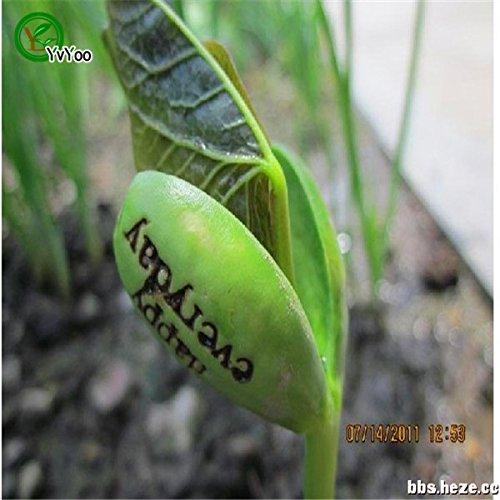 bonsai pianta magica di fagioli sementi delle piante regalo parola crescente del messaggio amore ufficio casa molto facile da coltivare 5pcs h035