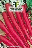 360 C.ca Semi Ravanello Candela Di Fuoco - Raphanus sativus In Confezione Originale Prodotto in Italia - Ravanelli