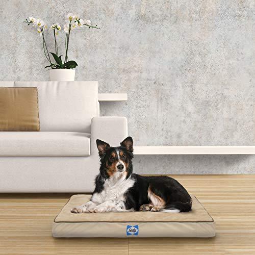 Sealy Hundebett, extraplüschig, orthopädisches Schaumstoff, maschinenwaschbar, Plüschbezug,