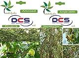 #6: DCS Amrood and Jungle Jalebi Seeds