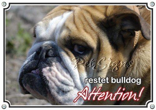 Petsigns - English Bulldog - Attention, 3. DIN A3 -