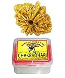 CHAKRADHARI 100% Original Do 2 Mukhi Rud...