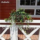 Perla Chlorophytum Semillas 100 piezas de tipo colgante maceta de flores de las plantas de interior Chlorophytum aire fresco Hogar Jardín resistente al frío 16