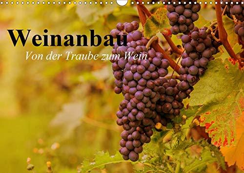 Weinanbau. Von der Traube zum Wein (Wandkalender 2020 DIN A3 quer): Schöne Impressionen vom interessanten Weinbau (Geburtstagskalender, 14 Seiten ) (CALVENDO Natur) (Traubensaft Für Wein)