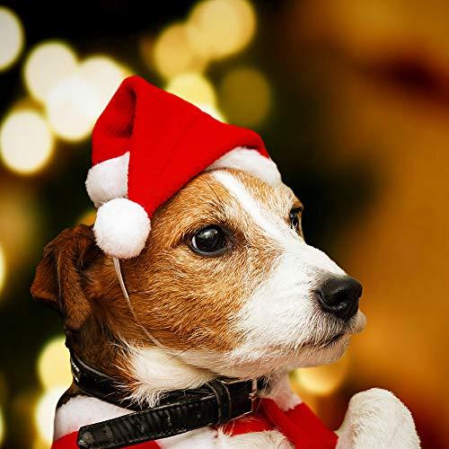 Minleer Cappelli di Babbo Natale (3 Pack), Cappellino Natalizio, Cappellino Natalizio Non Tessuto, Cappello Natalizio per Cani (Piccola Taglia Animale)