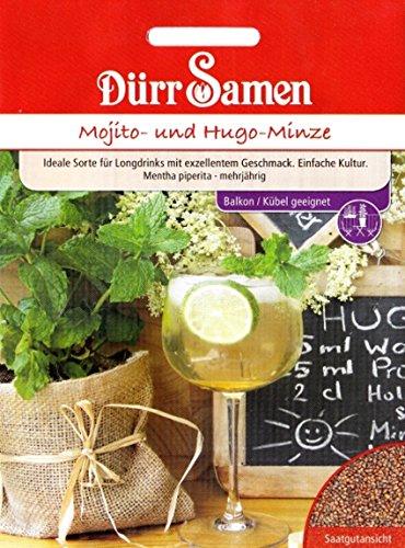 Mojito- und Hugo-Minze, Mentha piperita, ca. 50 Samen