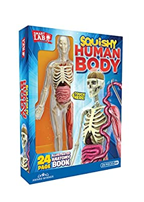 Smart Lab Squishy Human Body by Smartlab