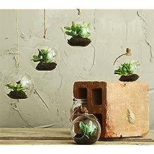 REAL TOUCH - Mini piante grasse in