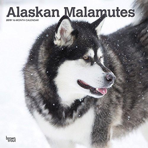 Alaskan Malamutes 2019 - 18-Monatskalender mit freier DogDays-App: Original BrownTrout-Kalender [Mehrsprachig] [Kalender] por Browntrout
