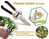 #4: Gardening Tools- Garden Shears Pruners Scissor, Pruning Seeds (8 inch) (Any Color) | Hedge Cutter | Garden Tool Set | Hedge Shear | Garden Shear | Grass Cutter | Pruner | Gardening Tools |