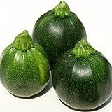 Zucchini Eight Ball Züchtersaat 10 Korn Samen
