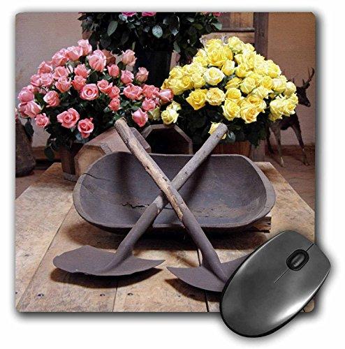 Danita Delimont - Flowers - Ecuador, Rosadex Rose flowers at Hacienda Compania - SA07 KWI0162 - Kymri Wilt - MousePad (mp_141147_1)
