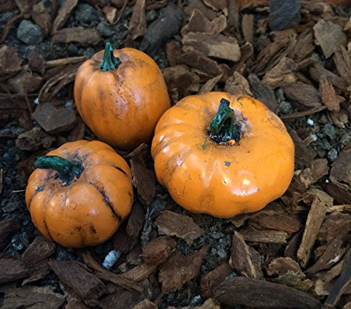 Die Fiddlehead Fairy Garden Miniatur Kürbis Zubehör Set (Set von 3) # 16498 (Kostüm Scary Pumpkin Halloween)