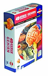 Fame Master 556056 - Anatomie Puzzle Gehirn
