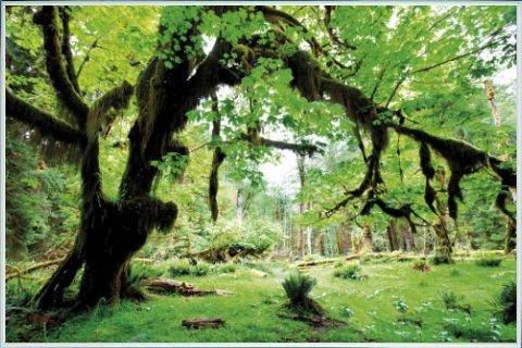 boschi-poster-stampa-e-cornice-plastica-deep-green-forest-back-to-nature-91-x-61cm