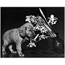 10x8 Print of Susi - pulling over a vase of flowers (14362469)