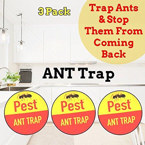 Producto nuevo para trampas de hormigas, cucarachas insectos. Trampa con veneno pegajoso para el exterior y el interior. Trampa con veneno de plagas: cucarachas escarabajo pulgas