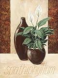 Artland Qualitätsbilder I Wandtattoo Wandsticker Wandaufkleber 30 x 40 cm Botanik Pflanzen Topfpflanze Malerei Creme A1XN Spathiphyllum Einblatt
