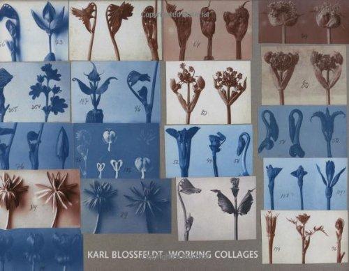 Karl Blossfeldt: Working Collages (The MIT Press) por Karl Blossfeldt