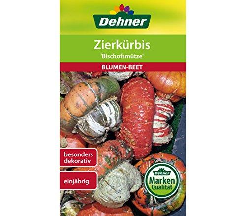 """Dehner Blumen-Saatgut, Zierkürbis """"Bischofsmütze"""", 5er Pack (5 x 6 g)"""