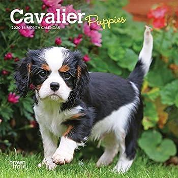 Cavalier Puppies 2020 Calendar