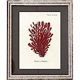 Dósfer 21921 - Cuadro decorativo, Corales rojos, 34 x 40 cm