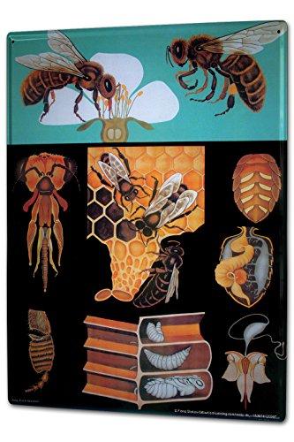 Blechschild XXL Kinderzimmer Biene Honig Wabe