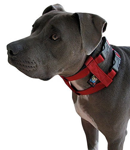 Artikelbild: Original Illusion Collar Trainingshalsband & Leine des amerikanischen Hundeflüsterer Cesar Millan, Größe Large, Schwarz