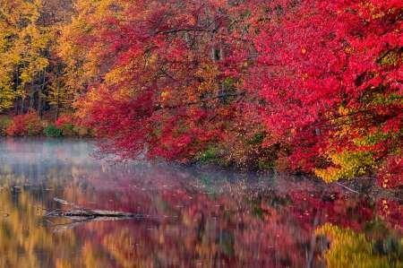 Feelingathome-STAMPA-ARTISTICA_x_cornice-PA,-Hidden-Lake-Alberi-in-autunno-riflettono-nel-lago-cm34x51-arredo-POSTER-fineart