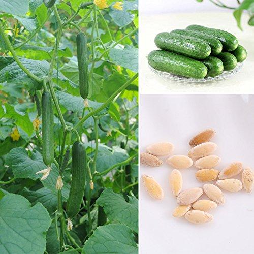 Rosepoem 15 Pcs Concombre Intérieur En Plein Air Disponible Fruits Légumes Graines Amour Plante Bonsaï