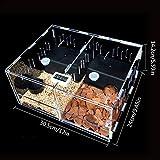 Scatola trasparente per rettili acrilici per animali domestici, scatola di alimentazione multi-striscia, scatola per animali domestici, in acrilico, per cuccioli di scorpione, trasparente