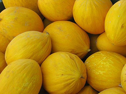 20 graines - MELON JAUNE - Melon Canari - Cucumis Melo