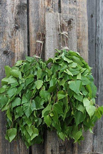 Birkenreisig für Sauna ca.50-55 cm lang