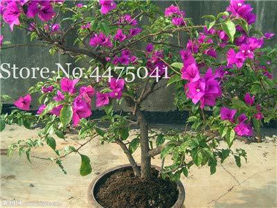 AGROBITS UHH-FGBH-GB22FG27901