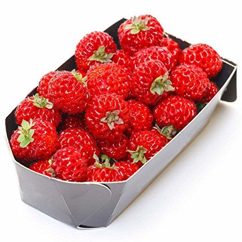 tomgarten Erdbeeren 'Mieze Schindler' | himbeerähnliche Erdbeer-Pflanzen | knallrote Früchte | winterhart | 18er Pflanzen- Pack