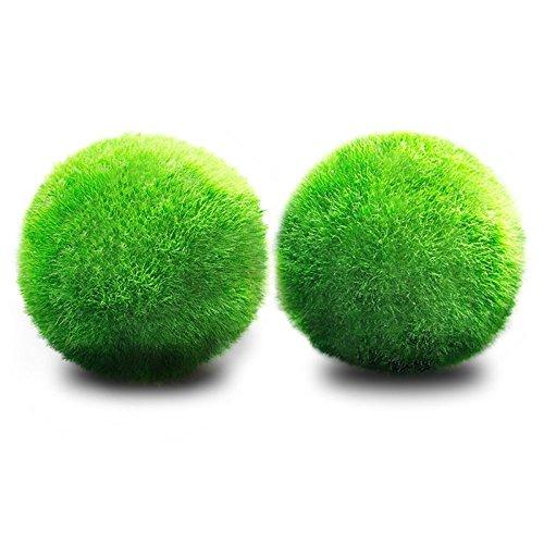 JIALONGZI 1 PCS Planta Viva Moss Ball Acuario pecera