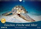 Tauchen, Fische und Meer (Wandkalender 2019 DIN A4 quer): Unterwasserimpressionen (Monatskalender, 14 Seiten ) (CALVENDO Tiere)