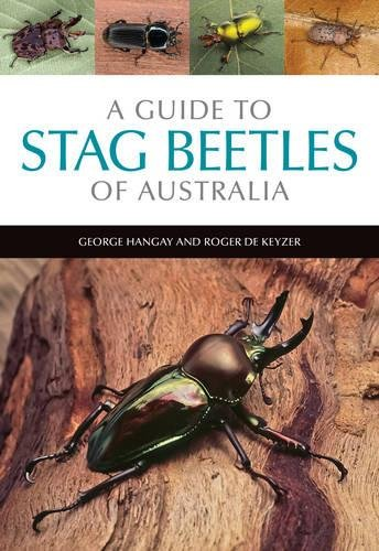 a-guide-to-stag-beetles-of-australia