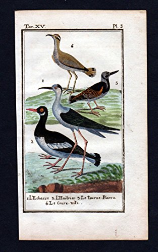 L'Echasse .. - Stelzenläufer echasse stilt Vogel Vögel bird animal Kupferstich antique print