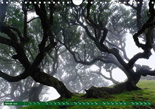 Madeira Blumeninsel im Atlantik (Wandkalender 2020 DIN A4 quer)