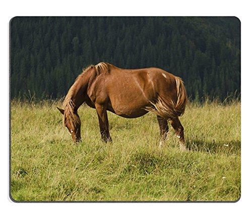 luxlady Gaming Mousepad-ID: 43566157Beautiful Bay Pferd Kratzer in den Bergen bei Sonnenuntergang Amazing Hipster Sunny natürlichem Hintergrund