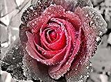 5D Diamant Gemälde Kreuzstich Kits DIY handgefertigt Full Drill Kunstharz Diamant Stickerei Mosaik mit Macht Tools Set Perfekte Geschenke für Home Dekoration, Pink Rose, 25x30cm