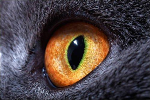 Cuadro sobre lienzo 90 x 60 cm: cat's-eye de Colourbox - cuadro...