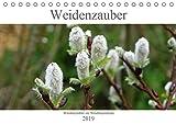 Weidenzauber (Tischkalender 2019 DIN A5 quer): Die Weide in ihren verschiedenen Erscheinungsformen. (Monatskalender, 14 Seiten ) (CALVENDO Natur)