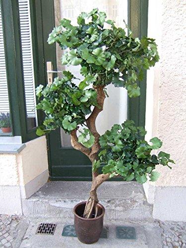 """Künstlicher Ginkgobaum, 1,60m """" on Crazy Trunc"""""""