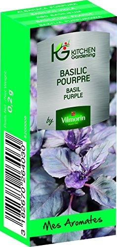 KG BY VILMORIN 8200008 Jardinières Basilic Pourpre Vert 7 x 3 x 2 cm