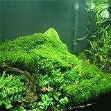 Bonsai Aquarium Grassamen 100pcs mehrfarbige Grassamen Neuartige Anlage für DIY Garten