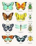 El origen de las especies de Charles Darwin (HARPERKIDS, Band 30)