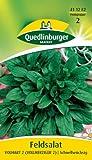 Feldsalat, Dunkelgrüner vollherziger 2